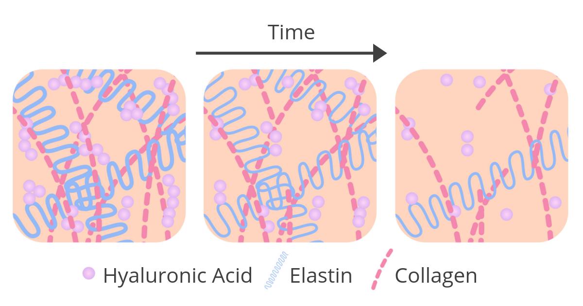 Definition Of Collagen Collagen Explained Melior